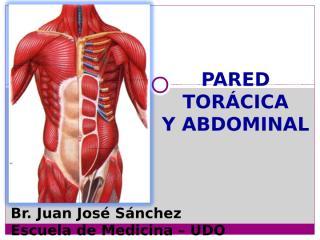 2-CURSO- PARED TORACICA Y ABDOMINAL.ppt