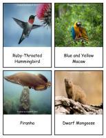 RainforestAnimals_Cards_2_byElaine.pdf